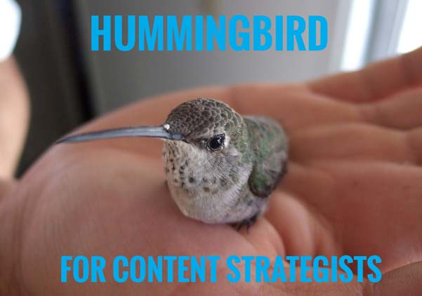 hummingbird for content strategists