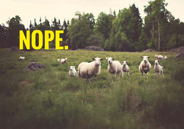 nope, sheep