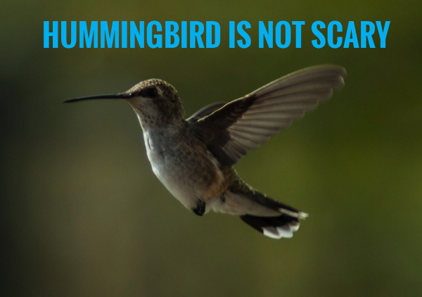 hummingbird is not scary